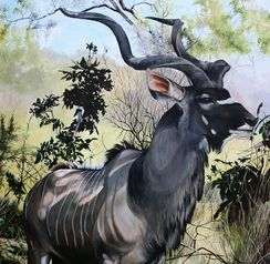 male kudu in the shade